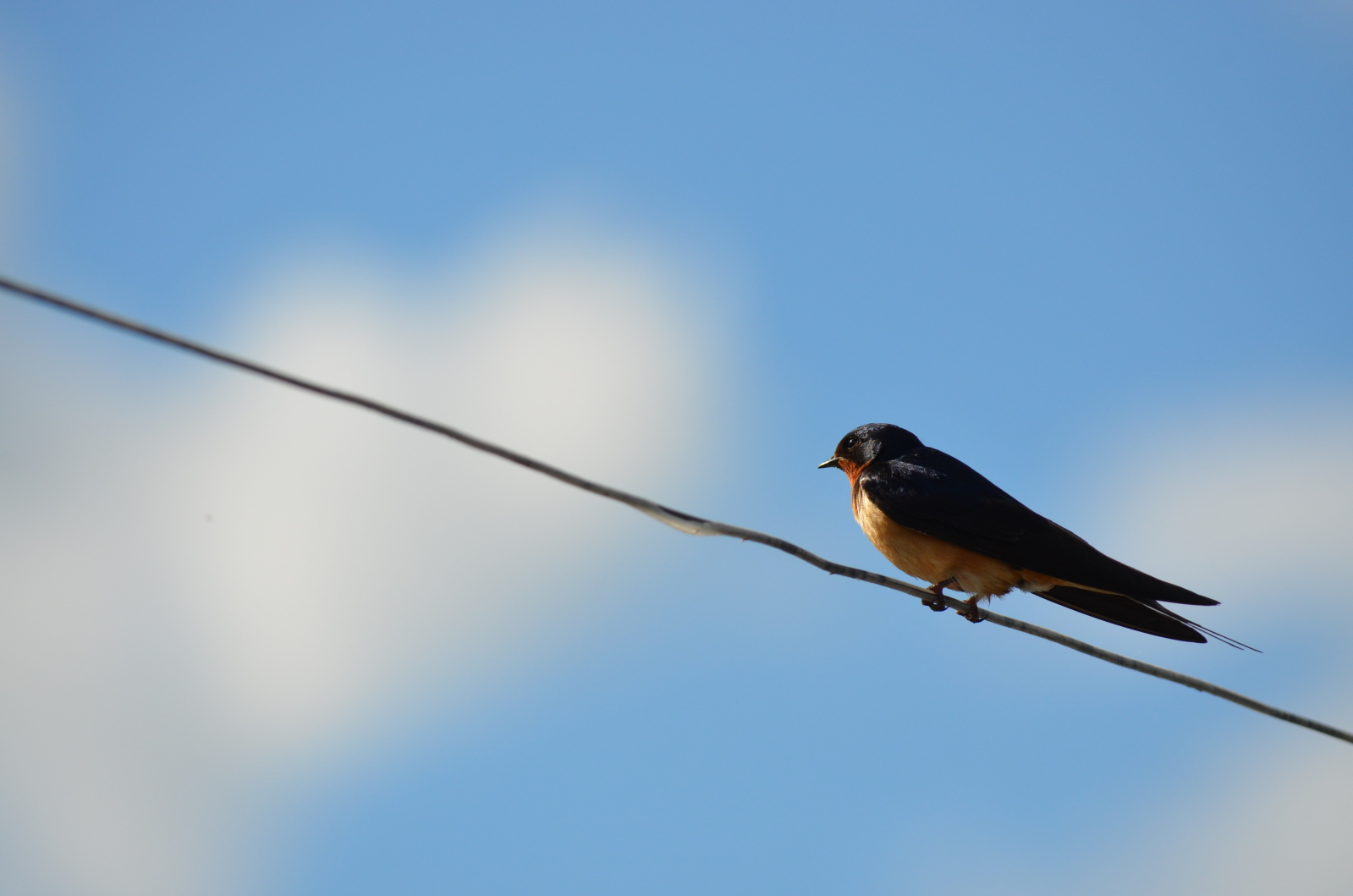 Birds on a wire photo display Senior Pictures Portraits Westerville Columbus