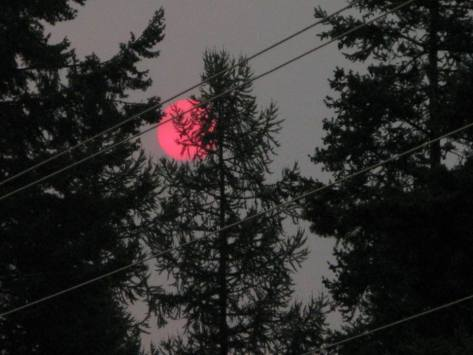 idaho red sun