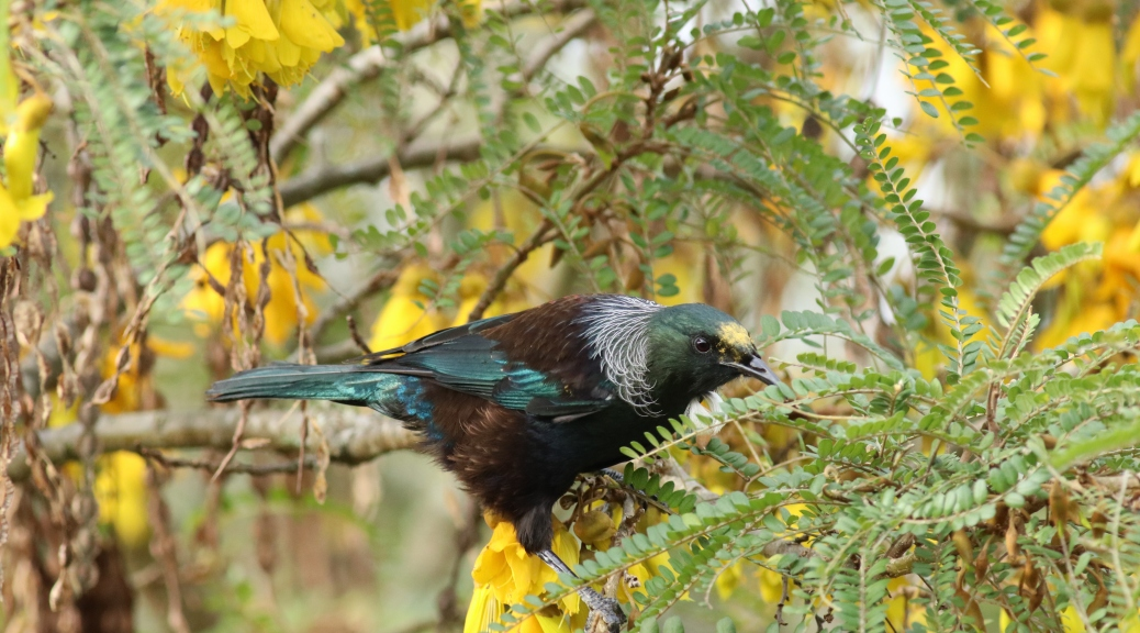 New Zealand Bird Feeding On Spring Flowers Weather Picture Of The Day