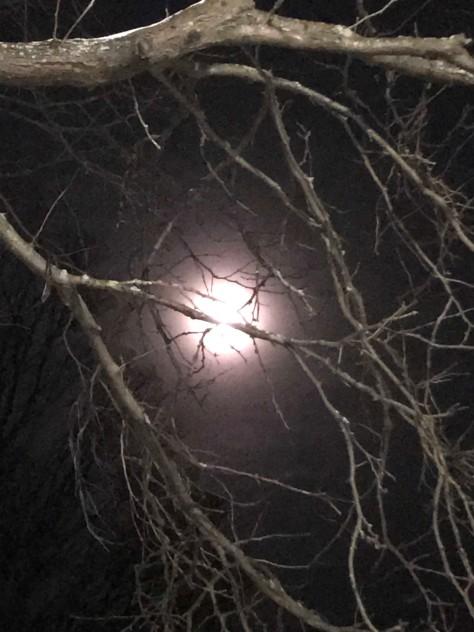 moon3feb19