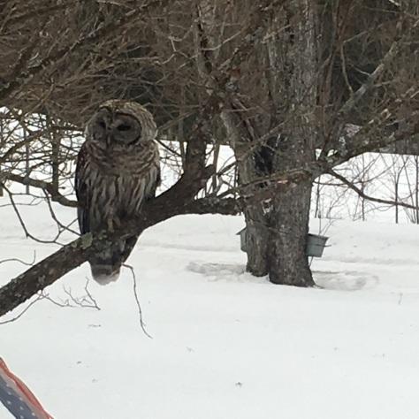 Owl.SapBuckets